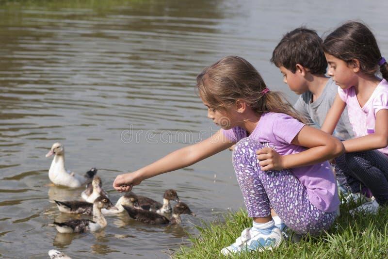 Petite fille à l'étang de canard image libre de droits
