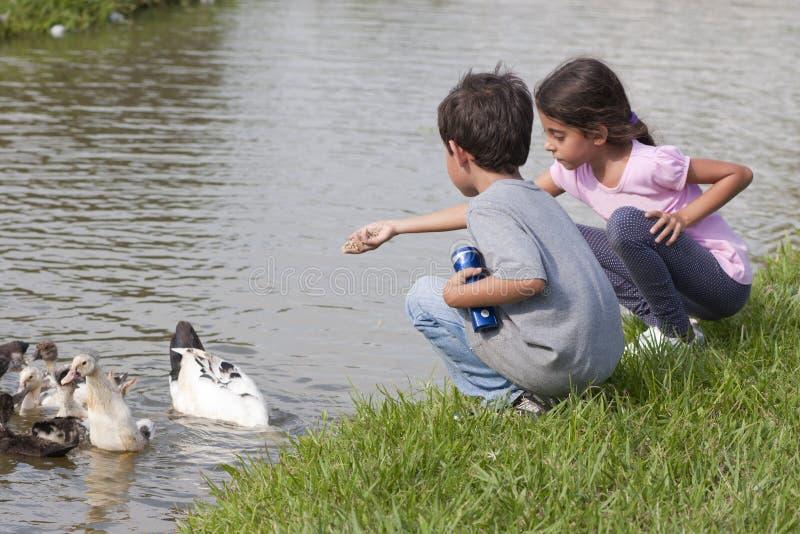 Petite fille à l'étang de canard photo stock