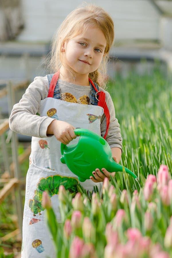 Petite fille arrosant des fleurs dans une serre photos stock