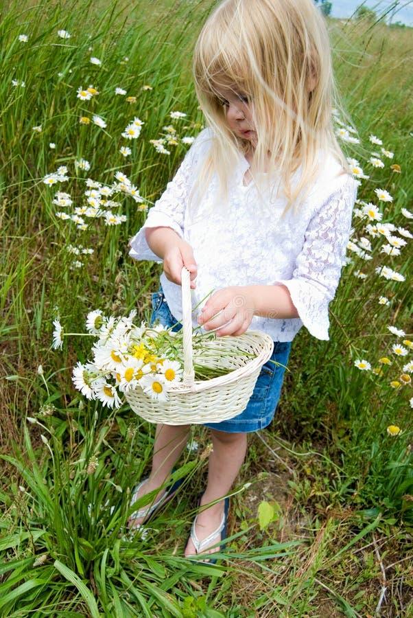 Petite fille avec le panier sauvage de marguerite images stock