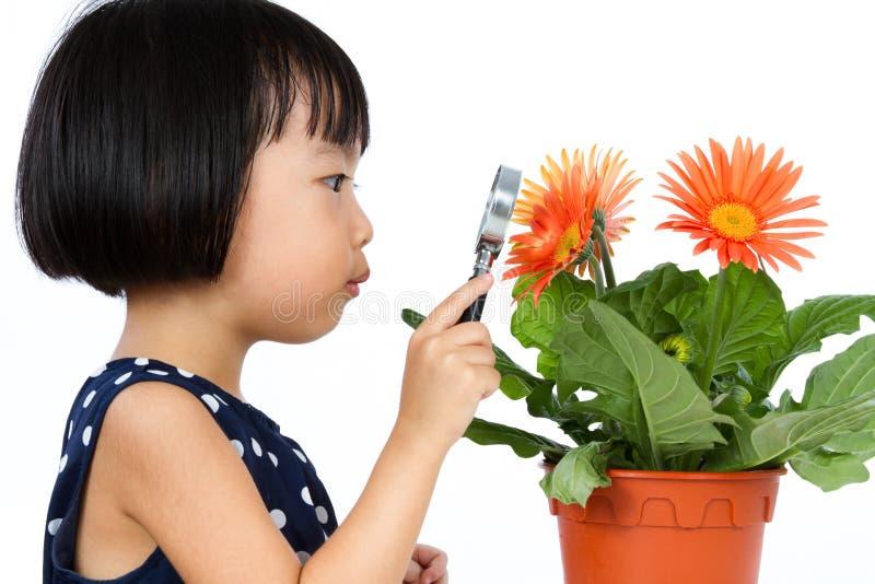 Petite fille chinoise asiatique regardant la fleur par un agrandissement photographie stock libre de droits