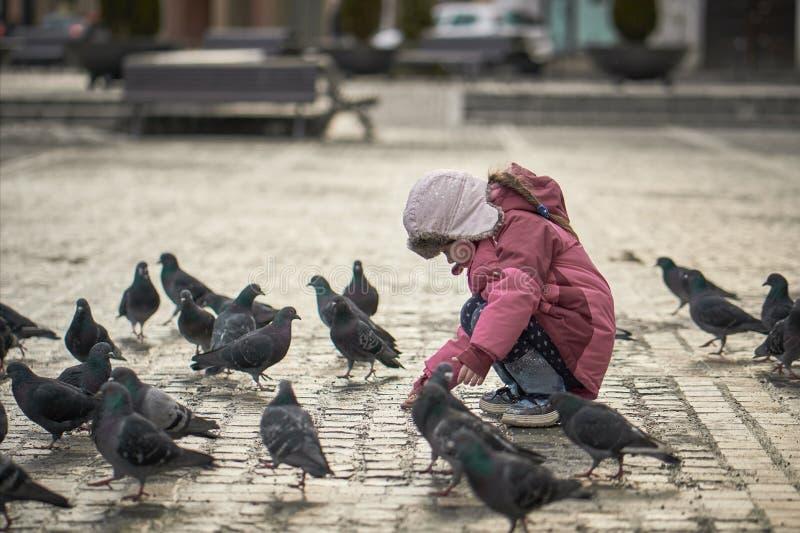 Petite fille dans les pigeons de alimentation d'une place de ville photo libre de droits