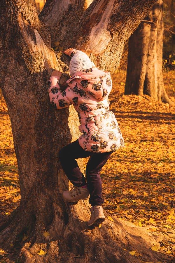 Petite fille et arbre photos libres de droits