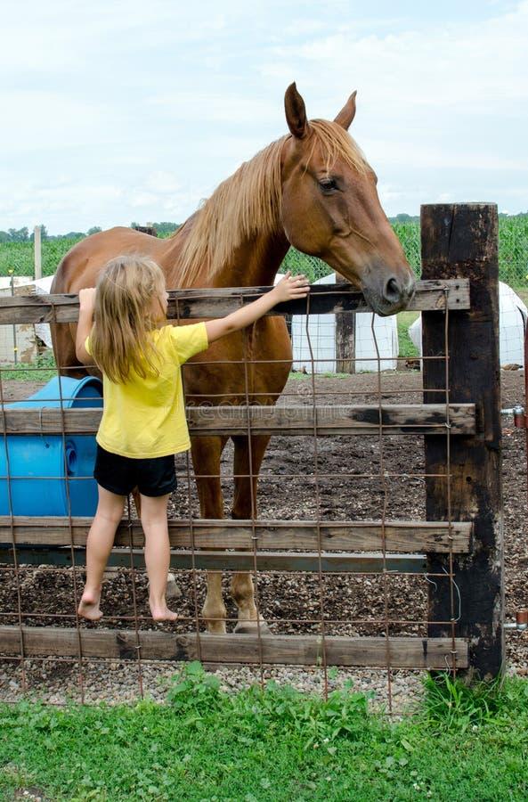 Petite fille et grand cheval photos stock