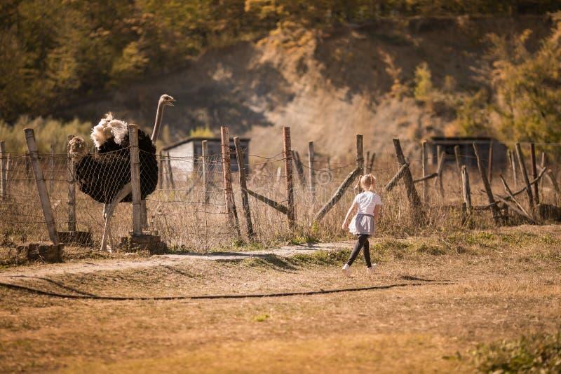 Petite fille et l'autruche photos libres de droits
