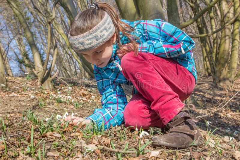 Petite fille et les perce-neige photo libre de droits