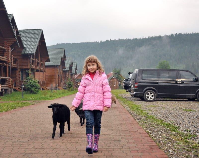 Petite fille et moutons photo stock
