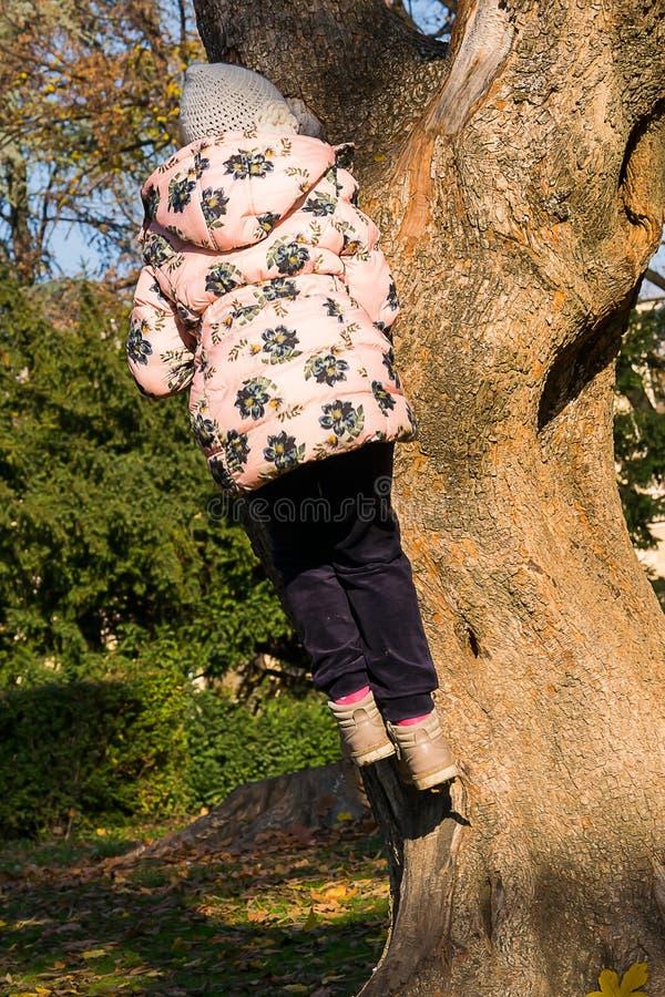 Petite fille grimpant à un arbre image libre de droits