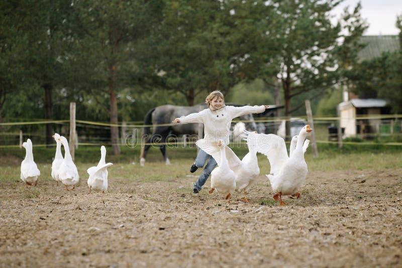 Petite fille heureuse douce courant après un troupeau des oies à la ferme ses bras au côté et au sourire Portrait de mode de vie photographie stock