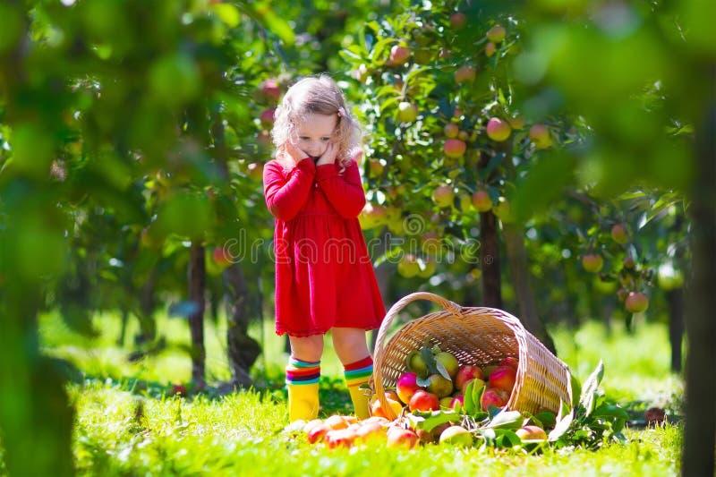 Petite fille regardant inclinée au-dessus du panier de pomme photographie stock