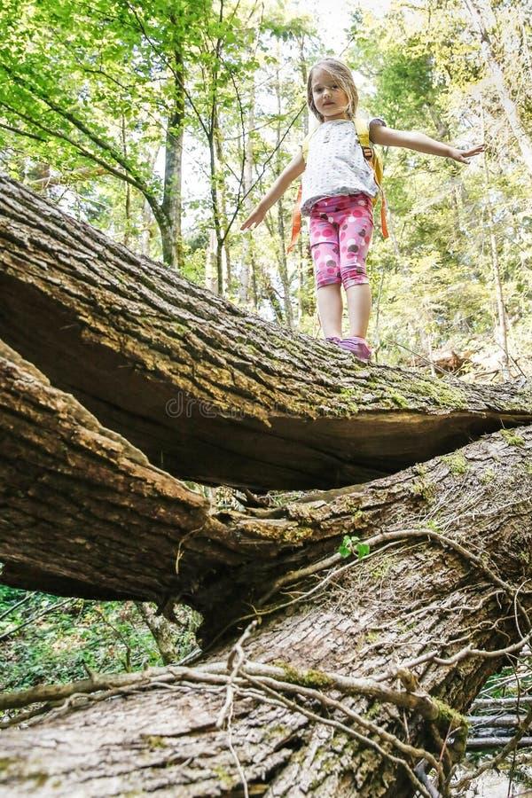 Petite fille scout courageuse tenant sur un identifiez-vous tombé les bois photographie stock libre de droits