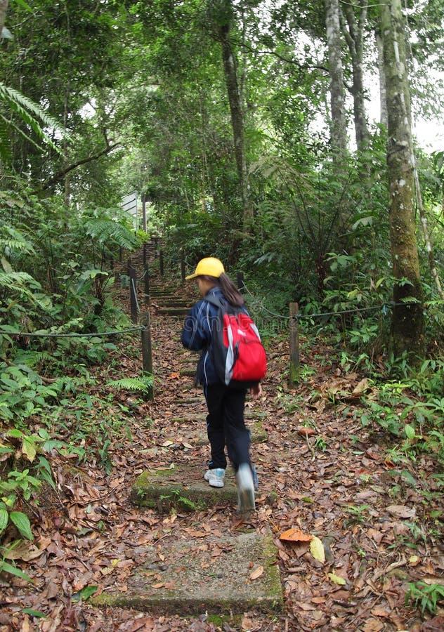 Petite fille sur la hausse de trekking de nature dans la forêt image libre de droits