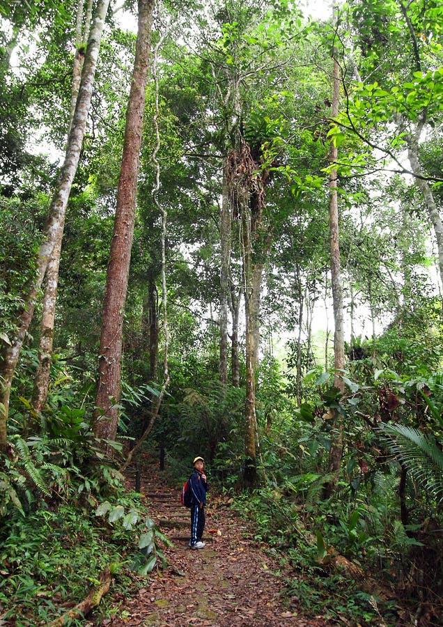 Petite fille sur la hausse de trekking de nature dans la forêt photo stock