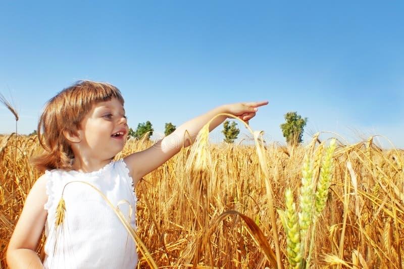 Petite fille sur une zone de blé photo stock
