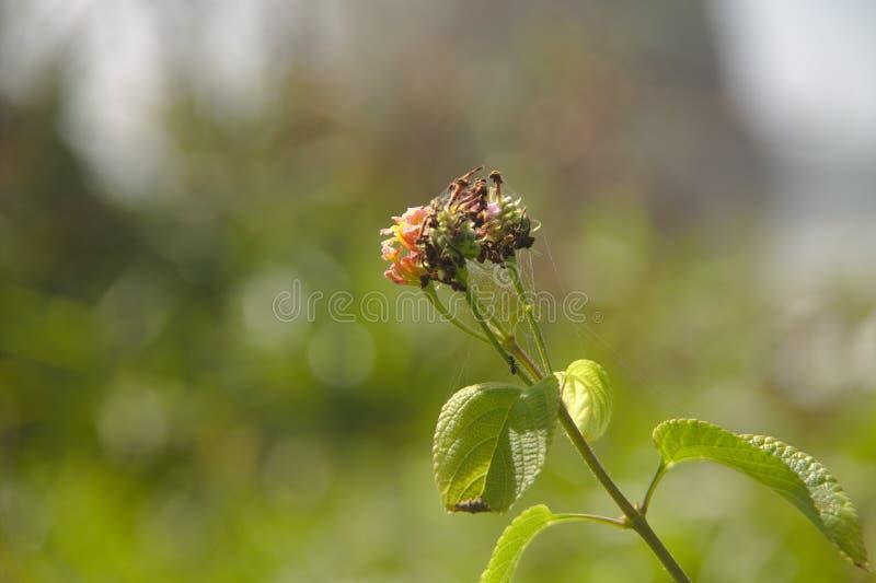 Petite fleur photos libres de droits