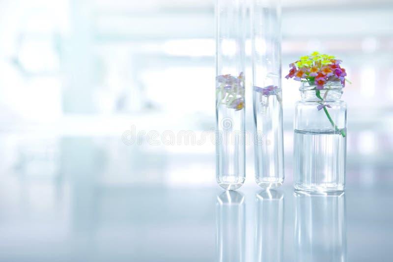Petite fleur avec le tube à essai et la fiole en verre en nature s botanique photo libre de droits