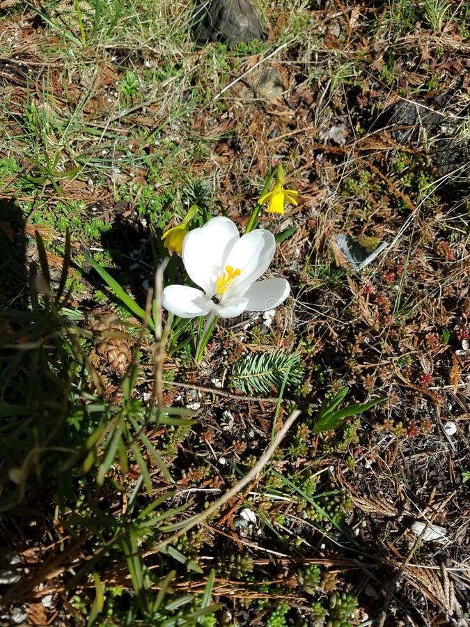 Petite fleur blanche solitaire photos stock