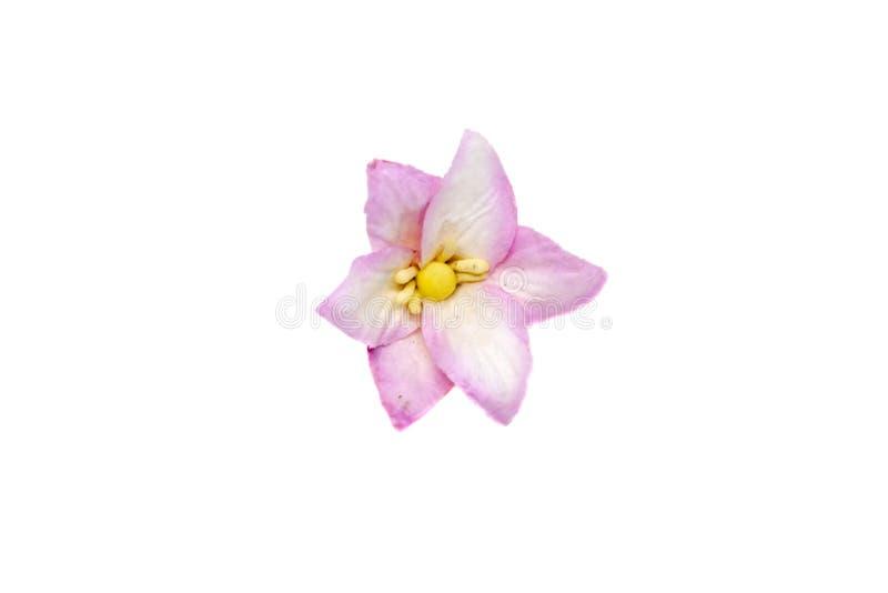 Petite fleur de papier lilas pour scrapbooking d'isolement sur le fond blanc photos libres de droits
