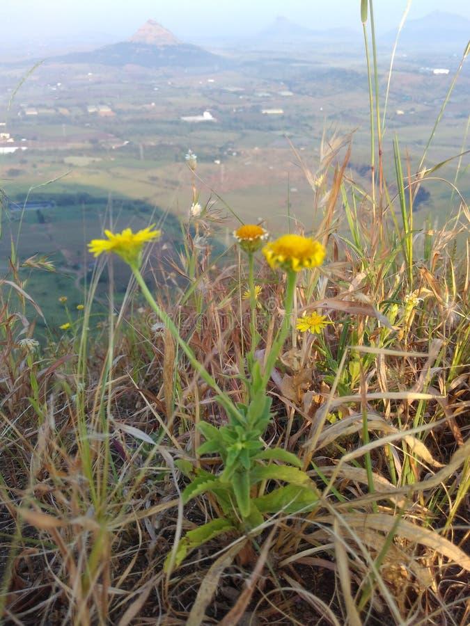Petite fleur jaune de couleur images stock