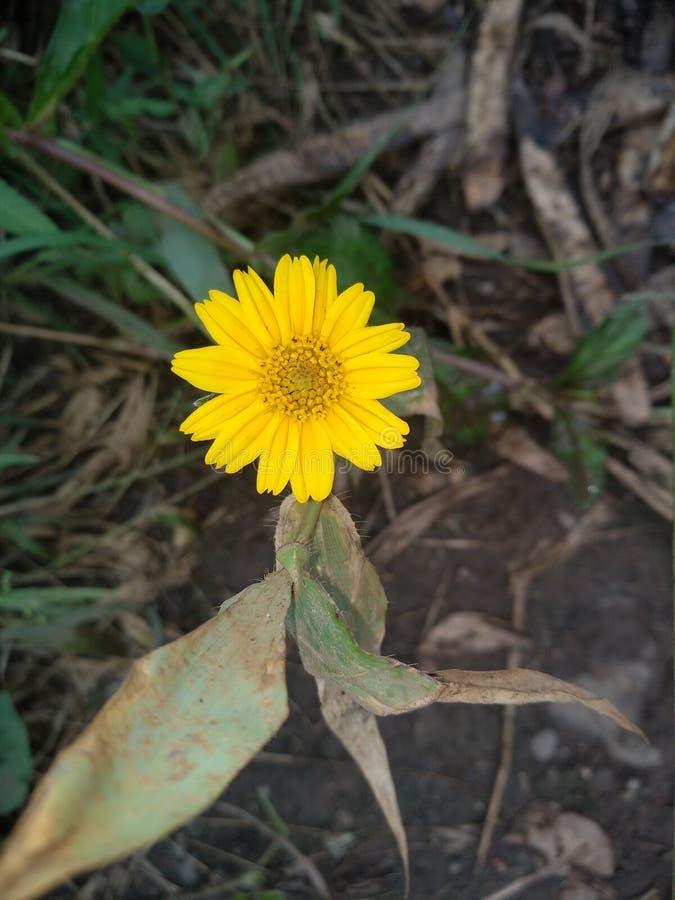 Petite fleur jaune mignonne image stock