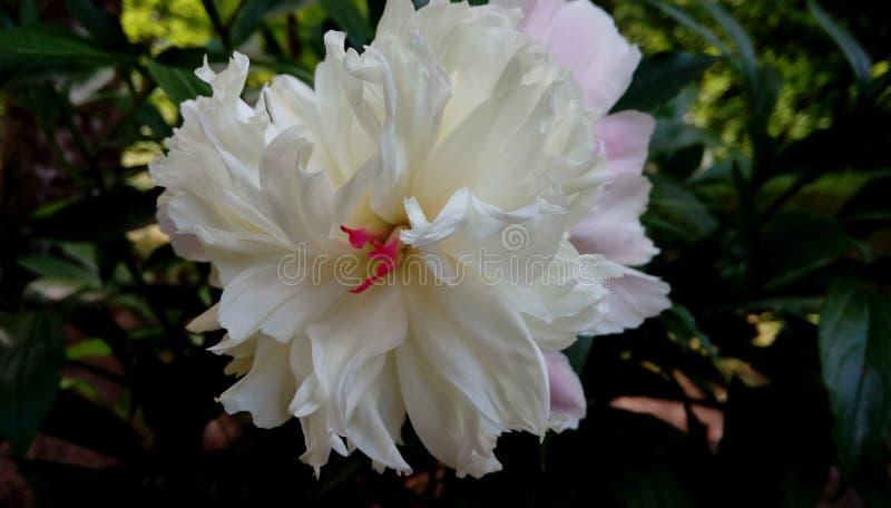 Petite fleur mignonne images stock