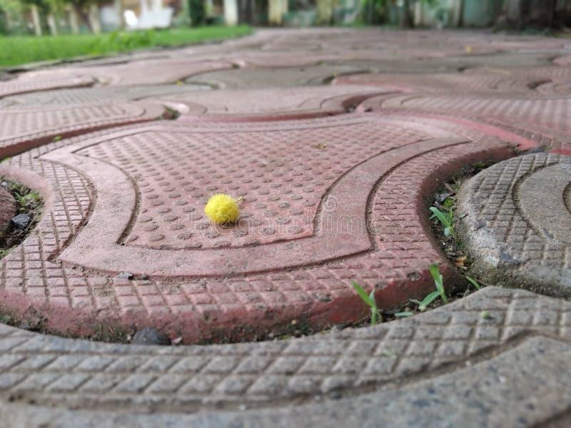 Petite fleur images libres de droits