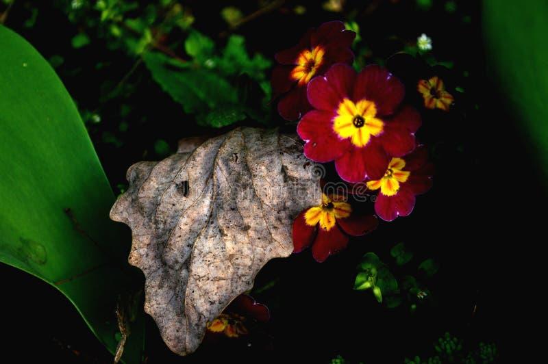 Petite fleur qui est sécrétée par l'oeil humain images libres de droits