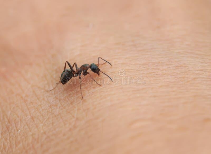 petite fourmi d 39 insecte rampant sur la peau de la main humaine photo stock image du faune. Black Bedroom Furniture Sets. Home Design Ideas