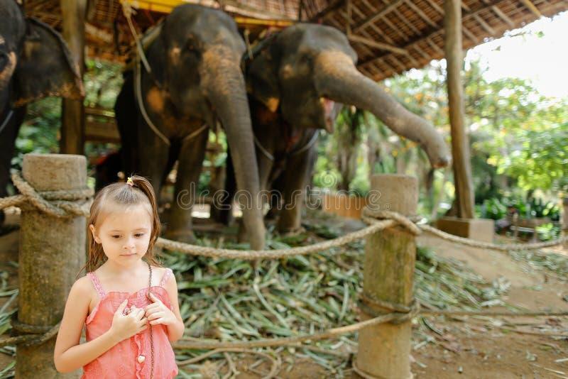 Petite gentille fille se tenant près des éléphants apprivoisés et attachés photo libre de droits