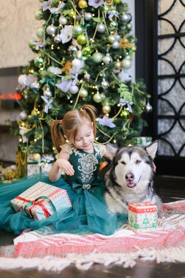 Petite gentille fille sittling avec le malamute et le cadeau près de l'arbre de Noël images stock