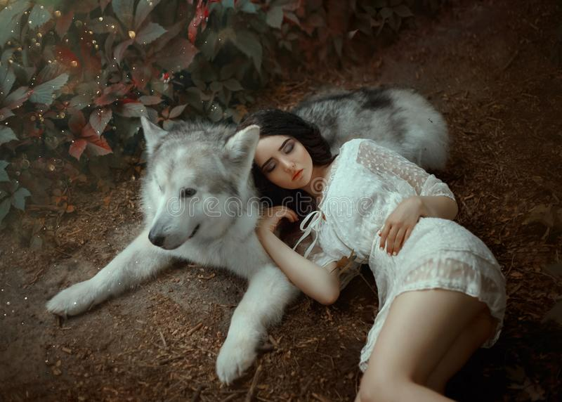 A petite girl with dark hair and soft cute face features is lying on gray-white forest wolf, doll in short white light stock photo