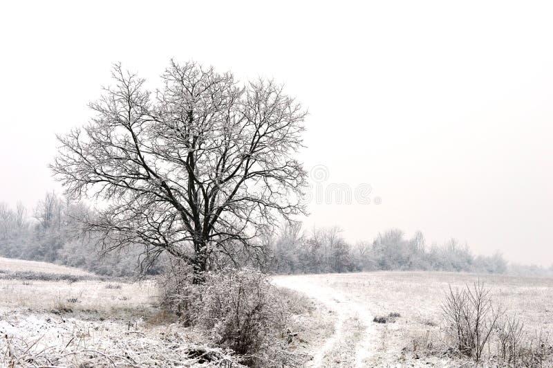 Petite maison la nuit dans la neige photos stock