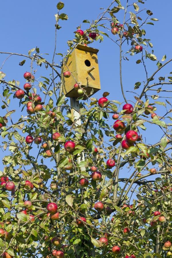 Petite maison pour des oiseaux images stock