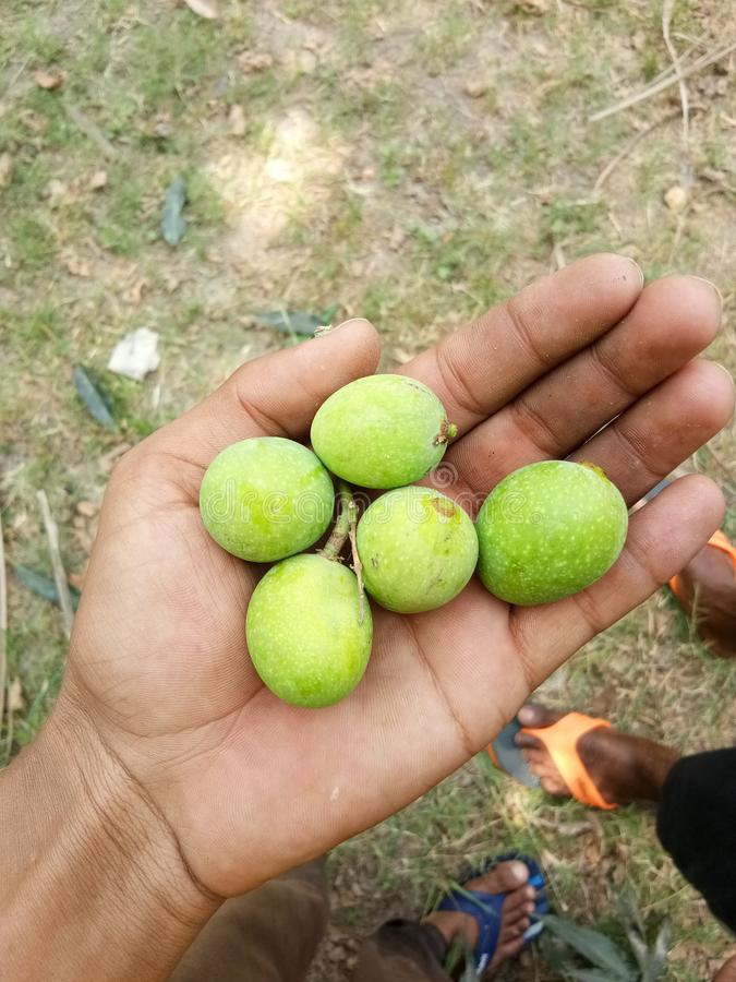 Petite mangue mignonne photo stock