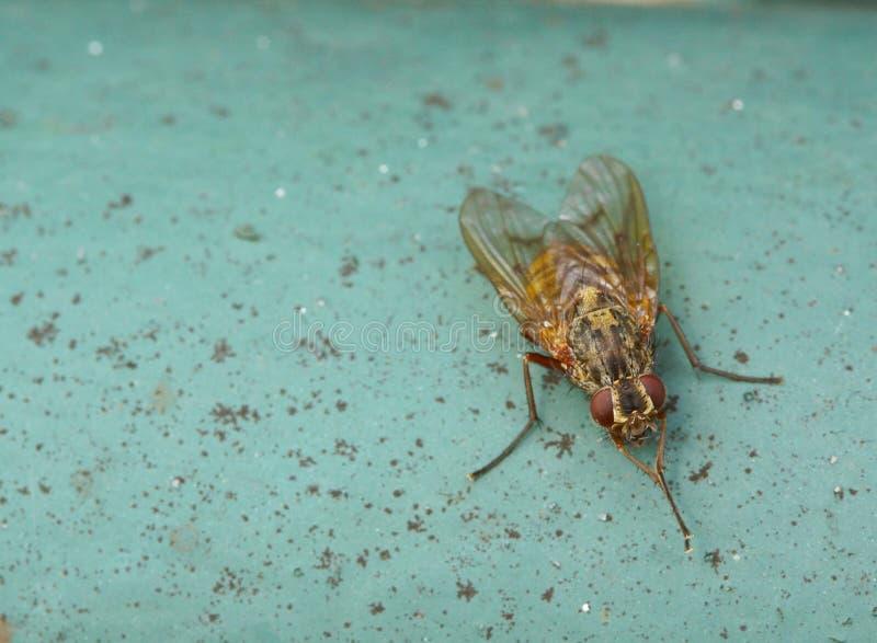 Download Petite mouche photo stock. Image du mouche, vert, insecte - 45352390