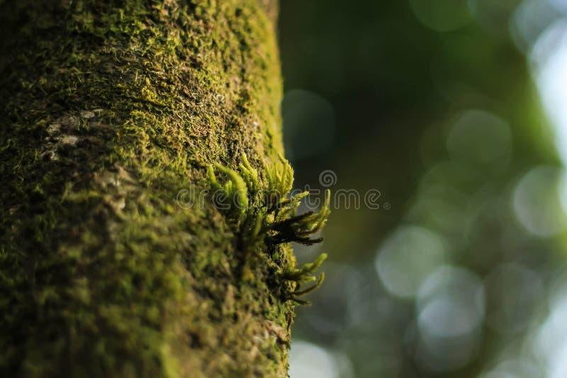 Petite mousse sur l 39 arbre image stock image du roche - Mousse sur les arbres ...