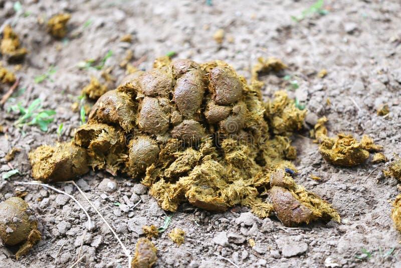 Petite pile d'engrais de cheval au sol photo libre de droits