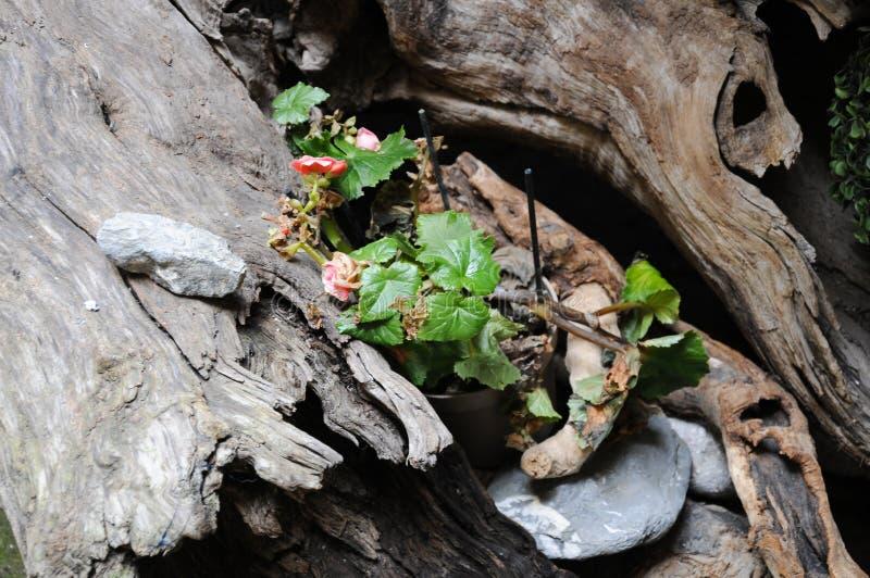 Petite plante verte à l'intérieur d'un rondin en bois photos libres de droits