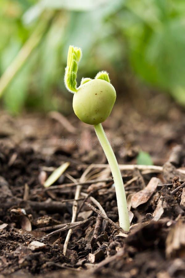 Petite plante verte image stock