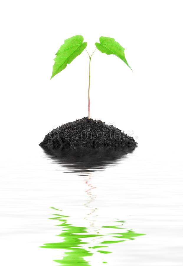 Petite plante verte croissante d'isolement photo stock