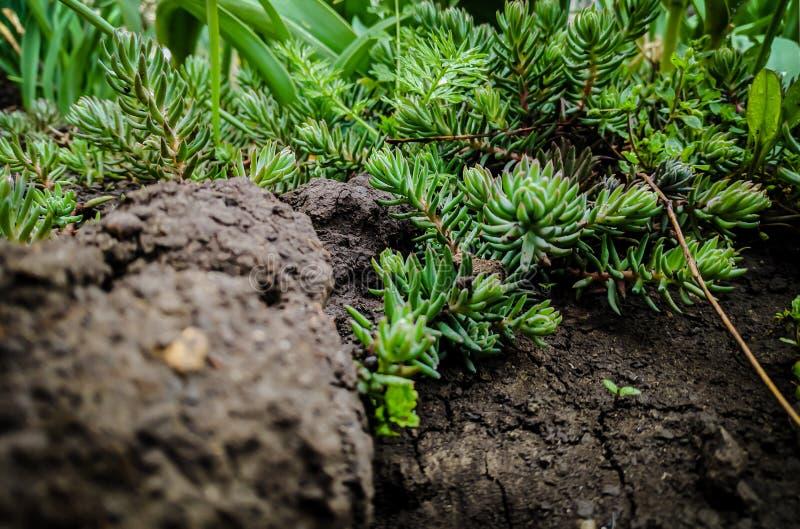Petite plante verte photos libres de droits