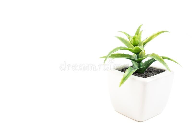 petite plante verte sur le fond blanc image stock image du petit espace 68509275. Black Bedroom Furniture Sets. Home Design Ideas