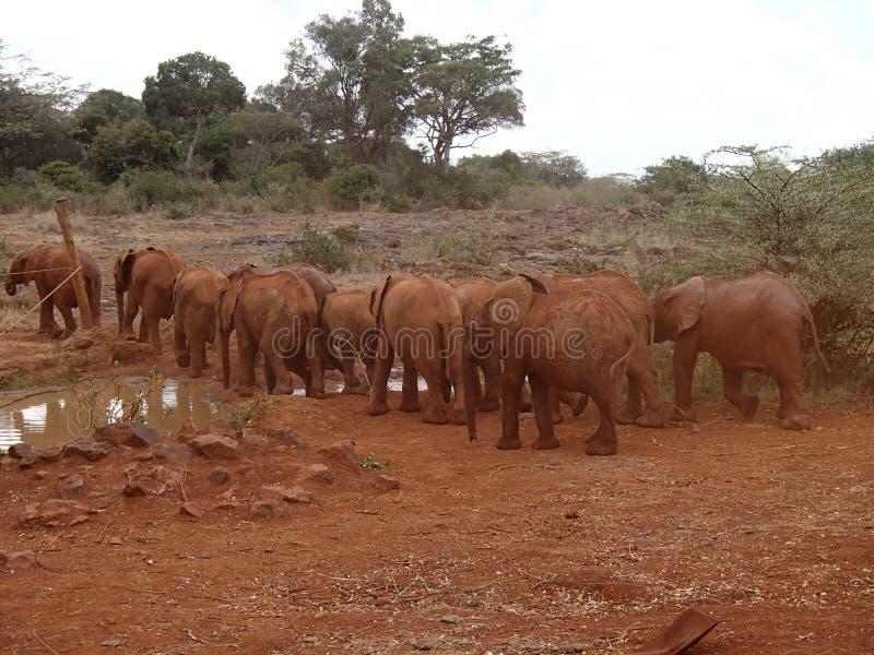 Petite promenade d'éléphant dans une colonne images stock