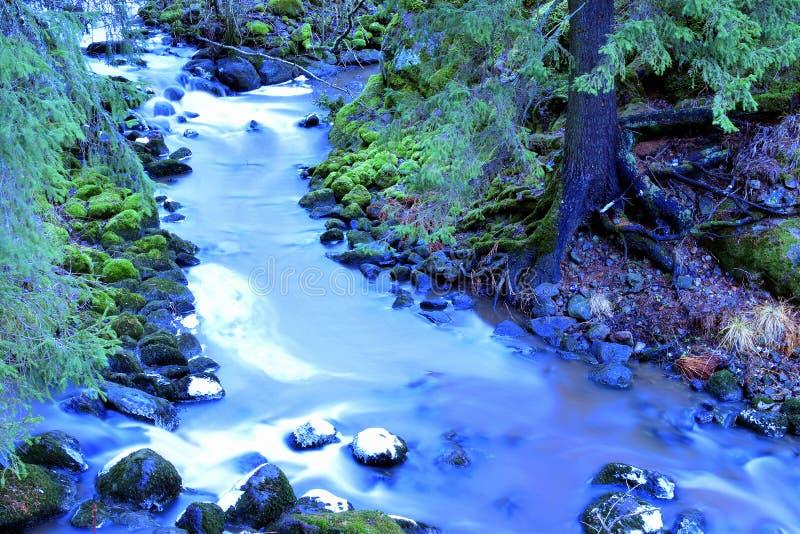 Petite rapide mystique, pierres couvertes de la mousse dans la forêt photo libre de droits