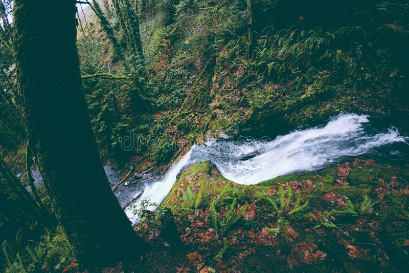 Petite rivière avec un fonctionnement actuel fort sur la colline dans une forêt photo libre de droits