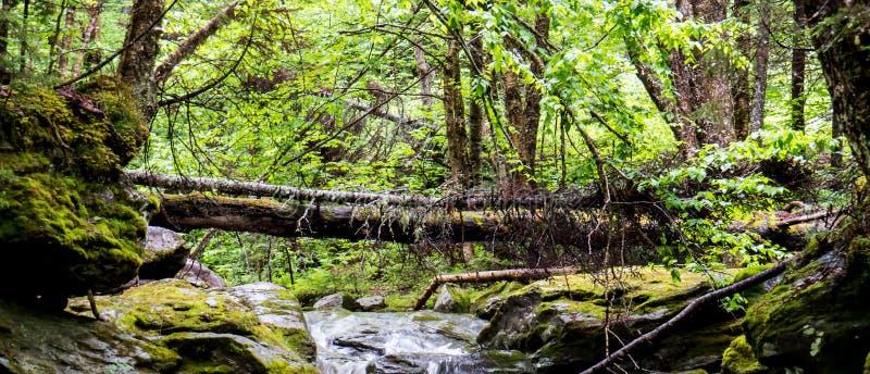 Petite rivière avec un tronc d'arbre au-dessus de lui photos stock