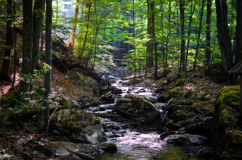 Petite rivière dans une forêt images libres de droits