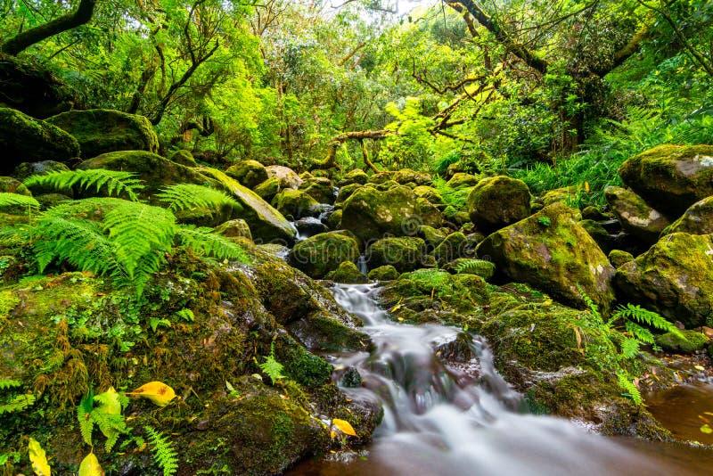 Petite rivière faisant sa voie par des roches et des bois verts de la Madère, Portugal image libre de droits