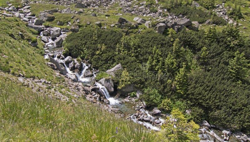 Petite rivière parmi les montagnes carpathiennes, Roumanie photographie stock libre de droits