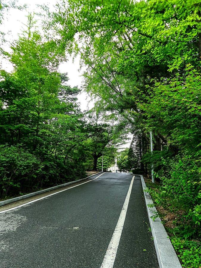 Petite route par le parc vert photo stock